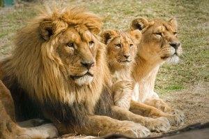 foto-familia-leon